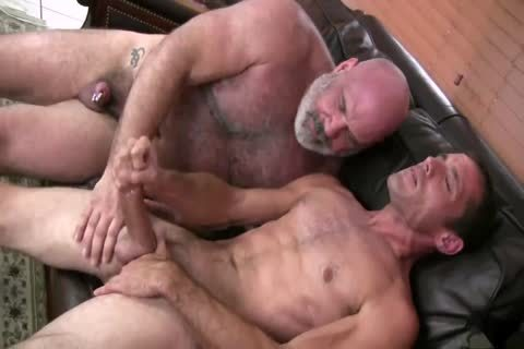fine Daddy Bear gets plowed