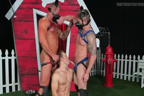 Puppies Destroing My small anal