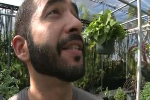 Bearded Hunk Sucks My weenie In A Greenhouse