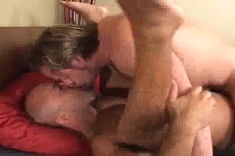 hot Bears Having fun Barebacking
