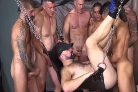 large Pig dicks In The yummy Sling
