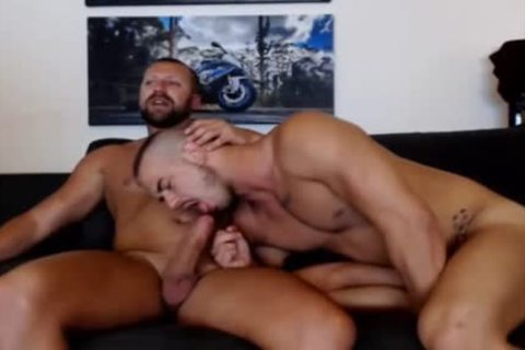 young Bear Sucks A daddy Bears cock Live On Cruisingcams Com